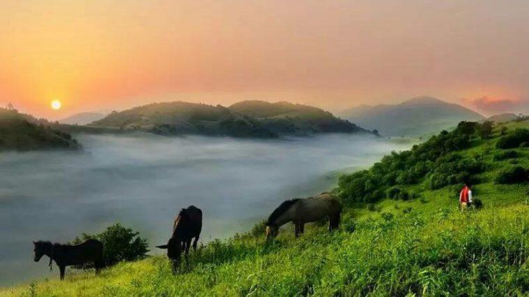 Daba Mountains (DaBashan), photo credit: Qinba Tea