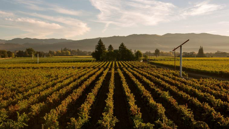 Rutherford Vineyards (Photo Credit: BV Winery)