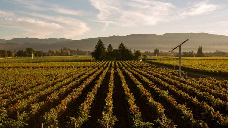 Rutherford Vineyards (Photo Credit: BV Winery)