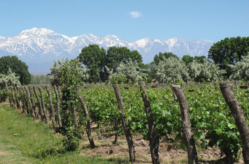Land of Malbec