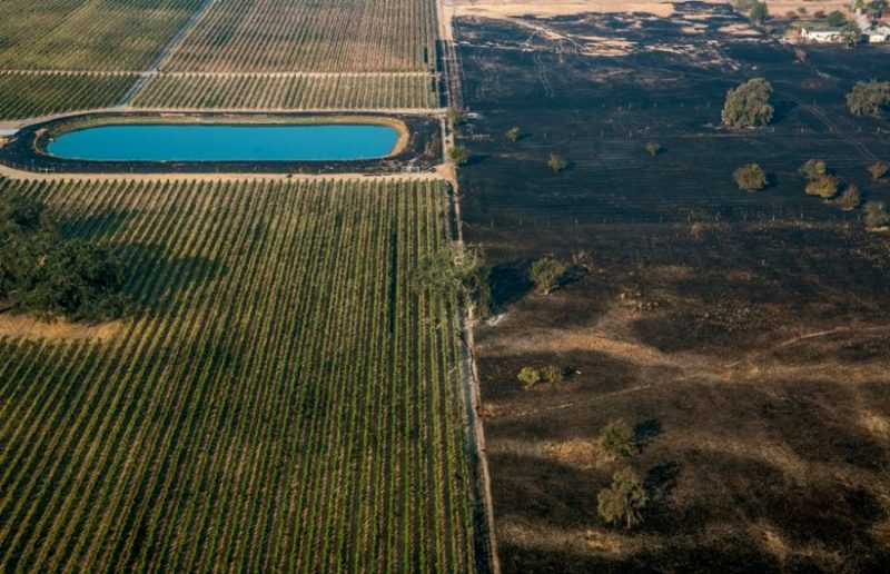 Post fire Cabernet vineyard. Photo George Rose