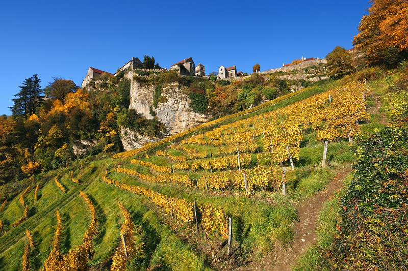 Sale of the Century: World's Oldest Wine Goes Under the